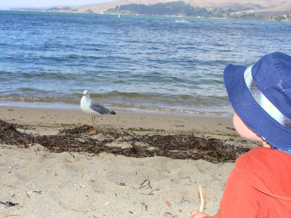 hmm, a seagull